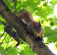 Beast on branch