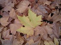 Micro landscape 1 - Autumn