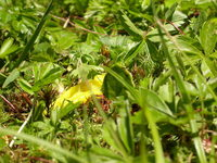grass 5