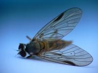 Die fly 1