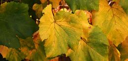 Autumn arrived 1