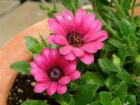 flower series 2