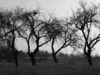 Scary trees 1