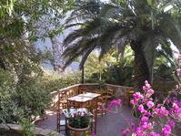 Cafe unter Palmen (Tenerife - Teneriffa)