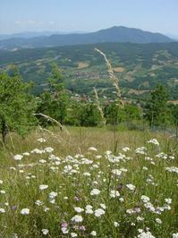 Toscana Tuscany 1