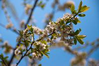 Spring flowering