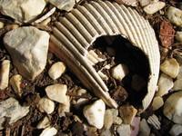 Broken Shell