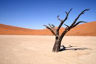 Sossusvlei death valley Namibia sand dunes