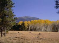 Mt. Humphrey 2