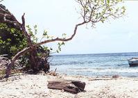 Apo Island, Philippines #1
