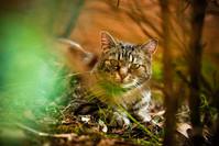 Willow Cat 10