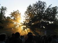 Sunset thru the trees