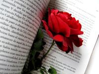 stockin around (rose)