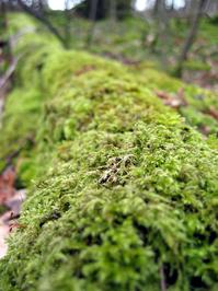 Woods_0 1