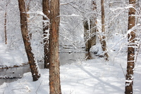 Unexpected Snow in March 6
