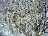 ice storm 2007 2