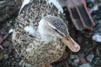 Quack quack.. 22