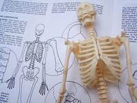 Skeleton Study 1