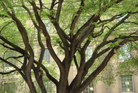 Tree Branches & Office