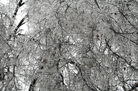 Missouri Ice Storm Disaster 4