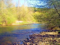 River with trees