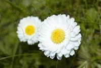 flower 's 1