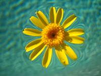 Pool flower