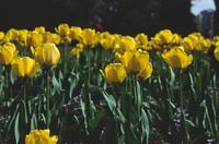 Flowers in Stanley Park 1