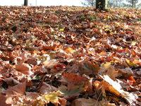 leafs 2