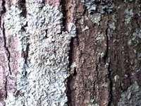 lichen 5