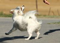 white little dog 1
