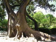 Strange Tree Branches 1
