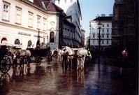 Horses in Wien