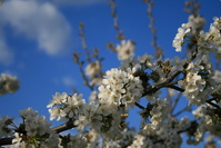 blooming tree 5