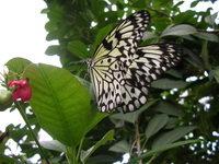 Butterfly Conservatory 8