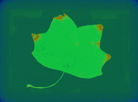 Pastel Leaf 3