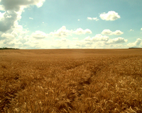 the:landscape