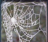 frosty spider's web