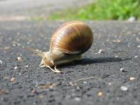 Road snail 1