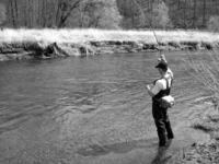 fly fishing - spring steelhead