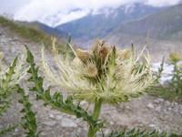 Plantas de Suiza 3