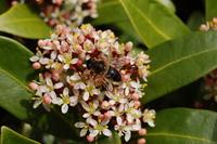 Bee landed on flower