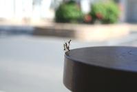 Dancin' Ants