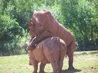 Amusing Rhinos