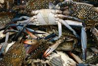 Muscat fish market 9