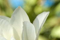 flower 's 3