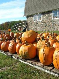 Pumpkin Farm 2