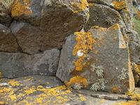 lichen these rocks
