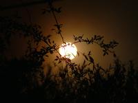 Leafy Night