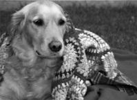 Bonnie in Blankets 1